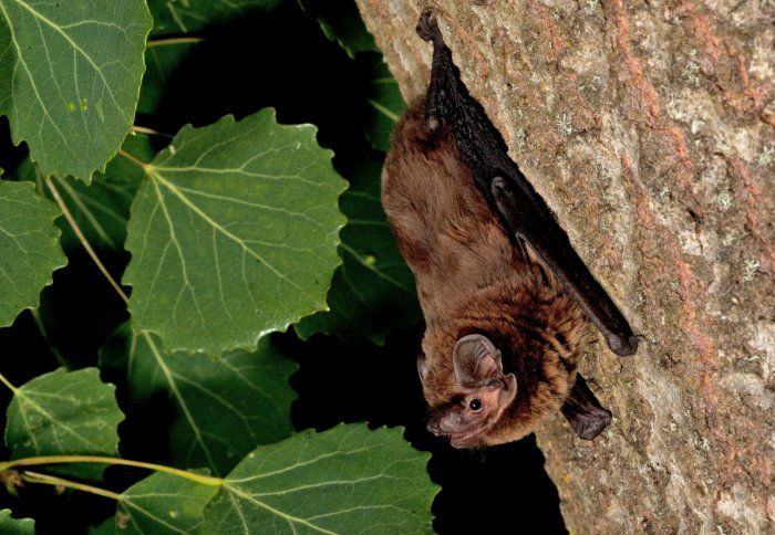 June 29 2017 at 12:46PM Smart detectors set to monitor urban bat life https://phys.org/news/2017-06-smart-detectors-urban-life.html  [PhysOrg]