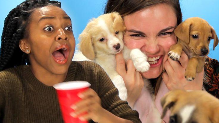 Betrunkene Frauen werden mit Hundewelpen überrascht.  #Hundewelpen #hund #Betrunkene  http://sumowave.com/betrunkene-frauen-werden-mit-hundewelpen-ueberrascht/