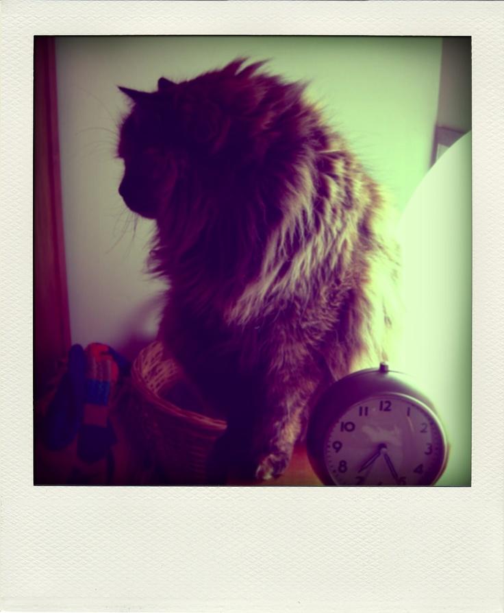 Mi gatita en su máximo esplendor de invierno