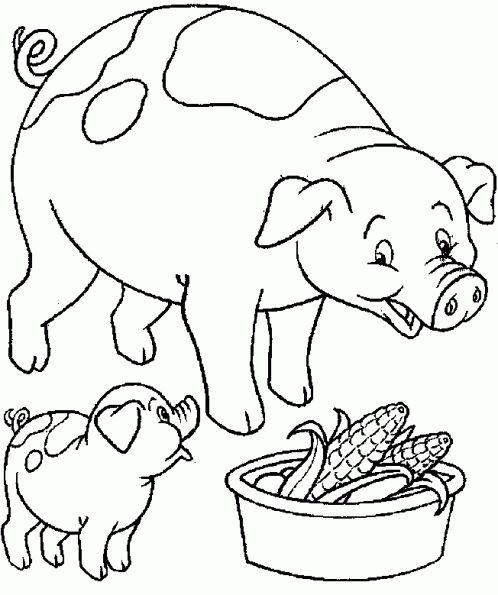 cochon-qui-mange-mais