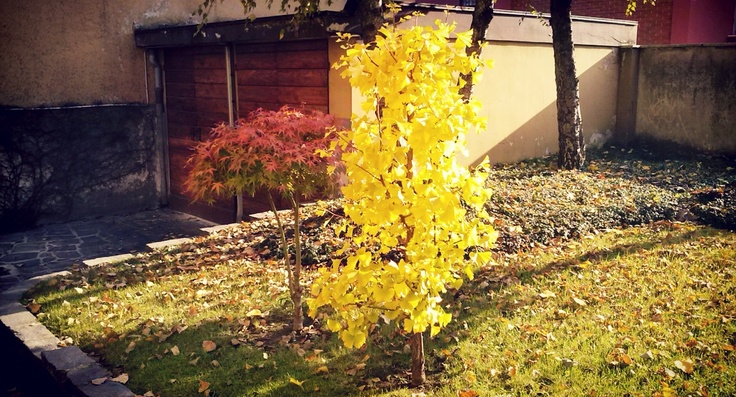 Autumn is coming in our little garden