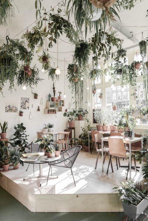 Cafe appreciation mmmm indoorolantsdroool