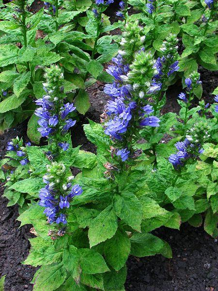 215 best landscape plants - wi northwoods