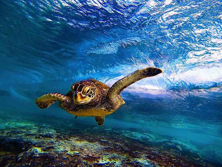Best GoPro Shots Images On Pinterest Gopro Photography - 33 incredible photos taken gopro