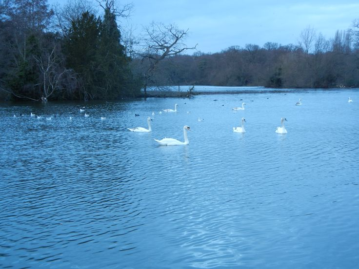 Chingford Lake