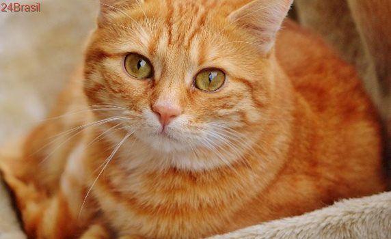 Saiba como cuidar de gatinhos idosos