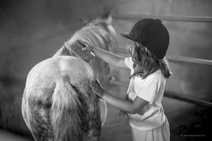 At the Skyros Island Horse Trust – Katsarelias Simpson Stud