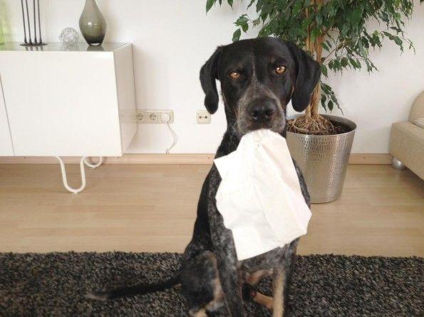Hundetrick: Gesundheit