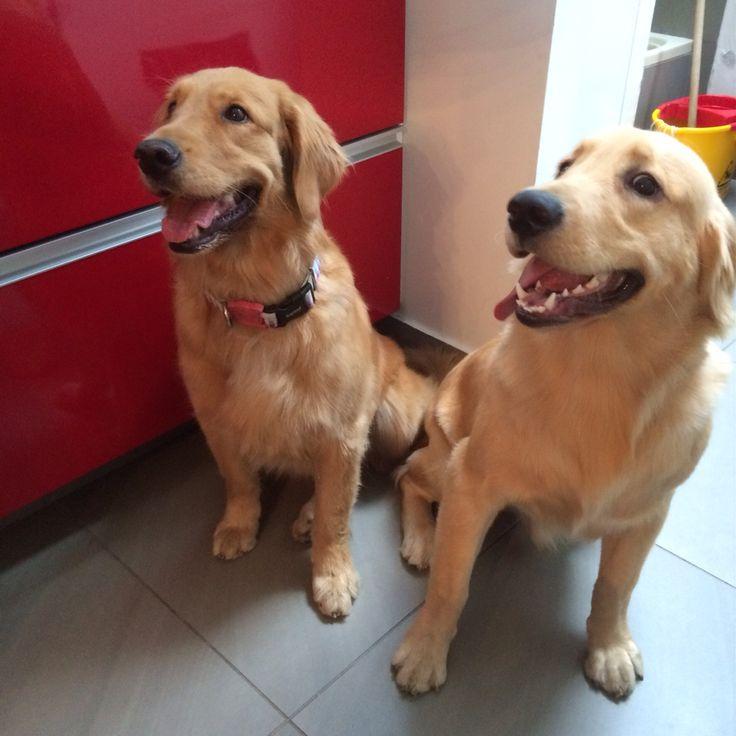 Layla et Boule ❤️