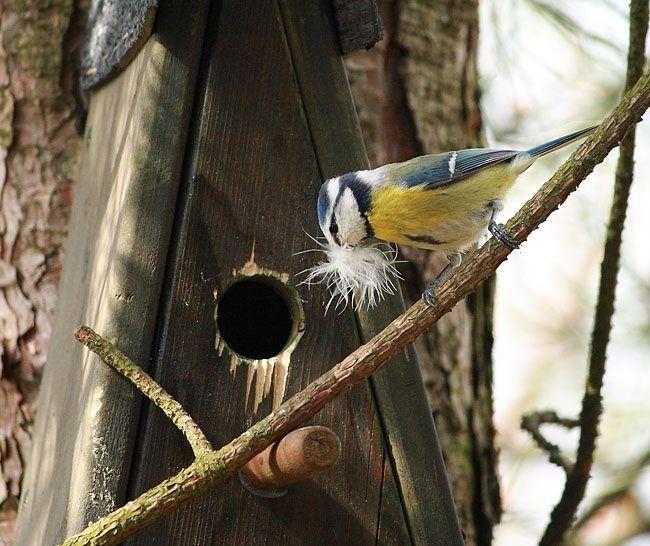17 best images about nichoirs pour oiseaux du jardin birdhouse nistkasten on pinterest. Black Bedroom Furniture Sets. Home Design Ideas