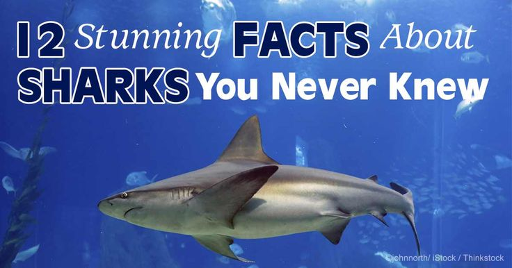 sharks are the most misunderstood fish in the sea Scientists know more now about these supposed man-eaters, but myths die hard   in favor of an intelligent, misunderstood, ancient sea creature  when one  manages to catch and kill a seal, the other sharks smell the blood.