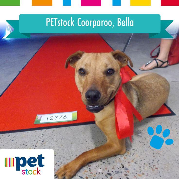 Bella the PETstock Coorparoo winner