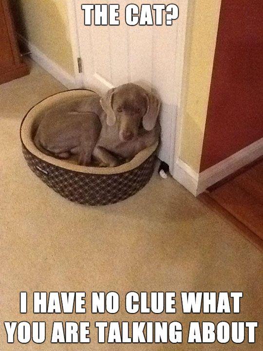 I Think That Dog May Be Hiding Something