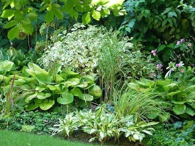 Les 135 meilleures images du tableau jardin d 39 ombre sur for Plantes ombre exterieur nord