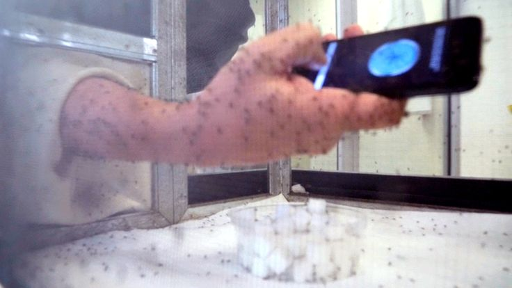 Kerry Sanders tests out anti-mosquito app; See Matt Lauer's reaction