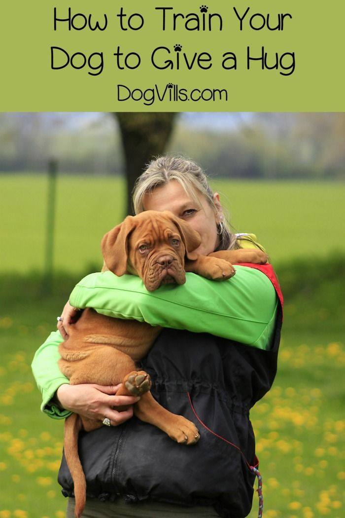 Learning how to train your dog to give a hug is easier than you might think! Check out our dog training tips + things to consider before teaching your dog to hug!