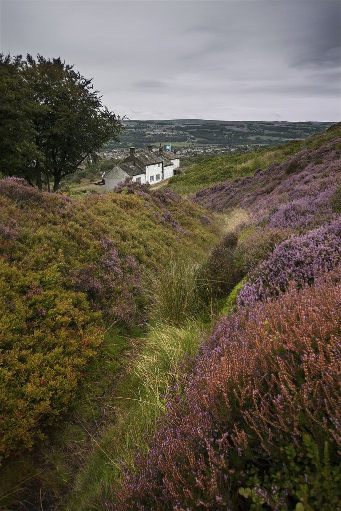 Ilkley Moor, West Yorkshire, England by R.M.Waddington- Am reading a book set in Yorkshire now and would just love to really go there