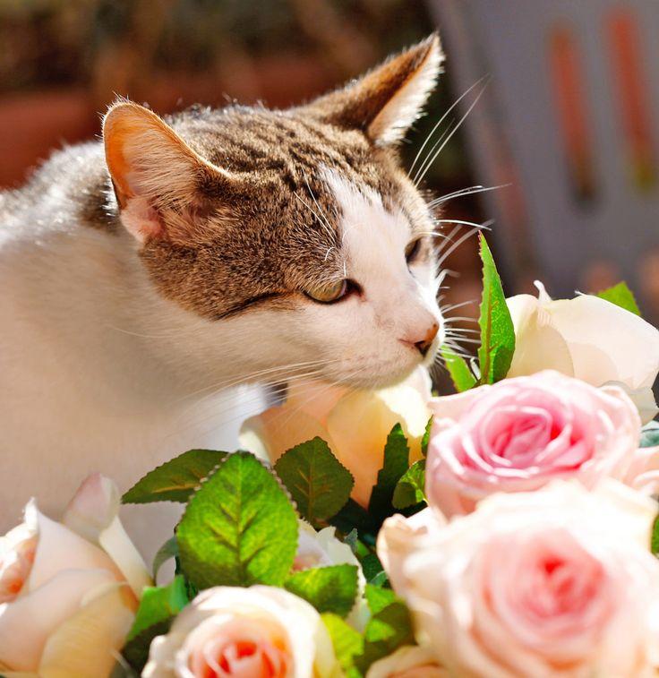 https://flic.kr/p/oXDt28 | joli sniffing roses - explore | explore