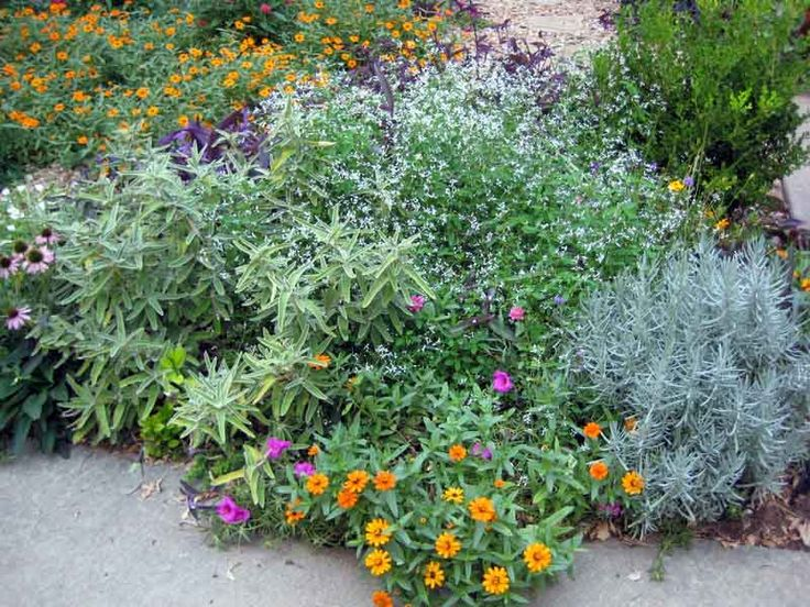 This small bed borders a driveway.  Use upright plants which soften edges but don't cover walking space.