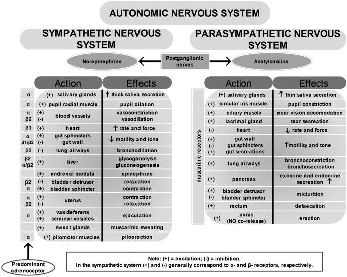 Concept Map Of The Divisions Of Nervous System