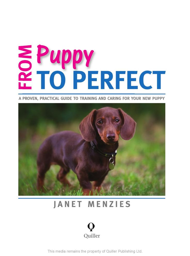 Take a look inside the incredibly knowledgeable and always popular author Janet Menzies's latest offering, 'From Puppy to Perfect', which promises to answer all the questions about owning and training your puppy.