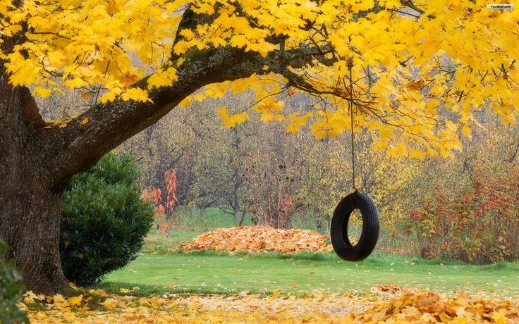 Swan Lakes, Remember This, Dreams, Childhood Memories, Autumn, Ropes Swings, Tires Swings, House, Trees Swings