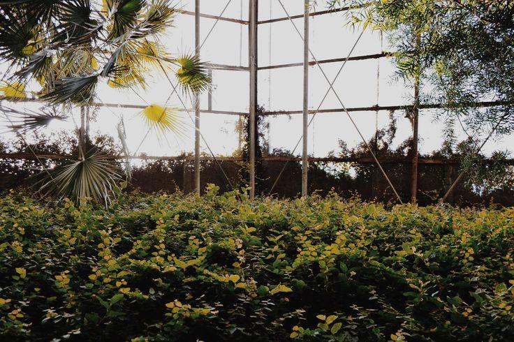 Bothanical Garden in Cluj-Napoca