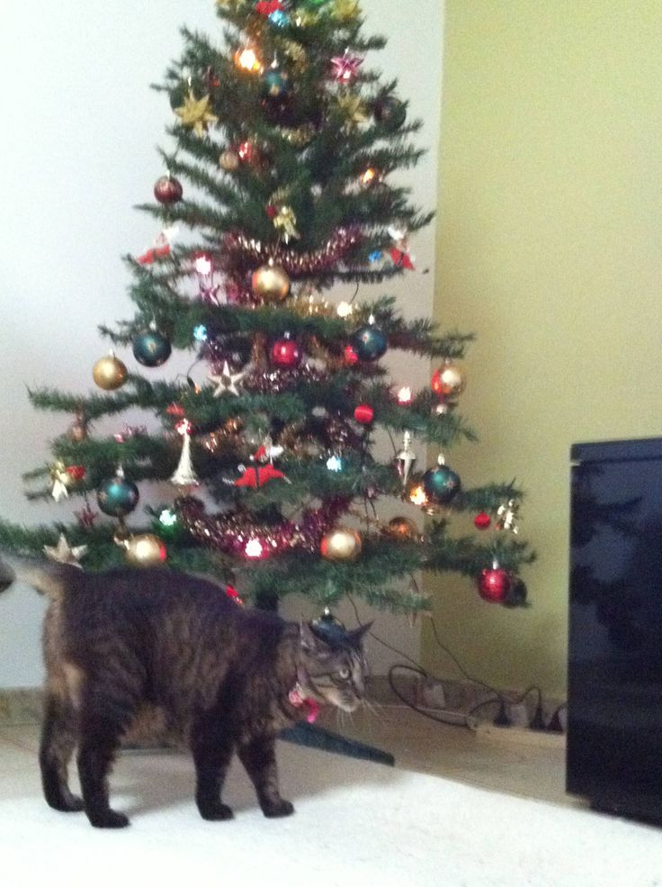 My 1st Christmas without Pepper 2014