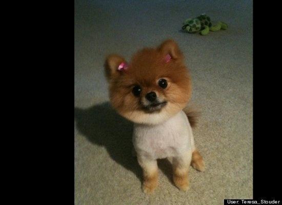 Top 10 cele mai amuzante poze cu animale în 2011