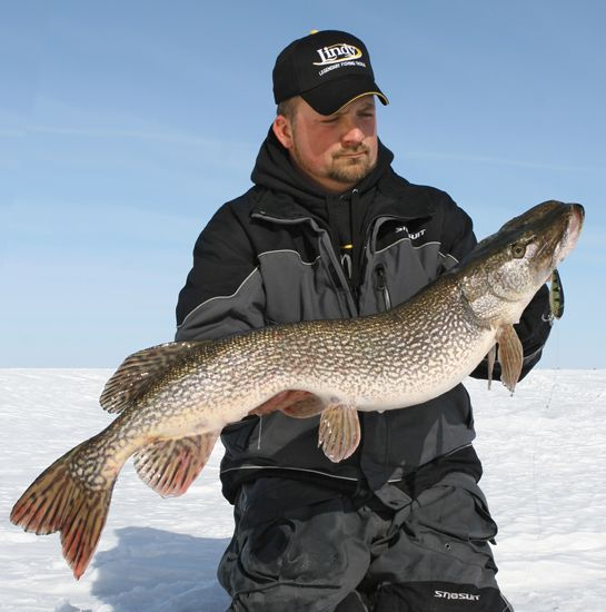 Pike fishing tips.