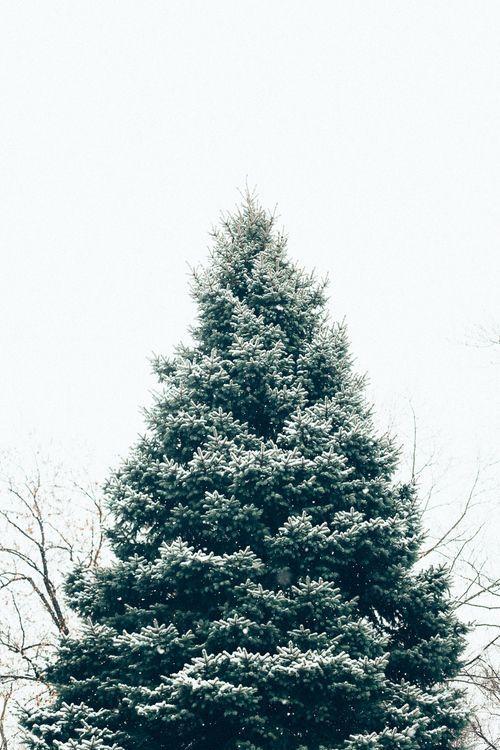 Winter Tree /
