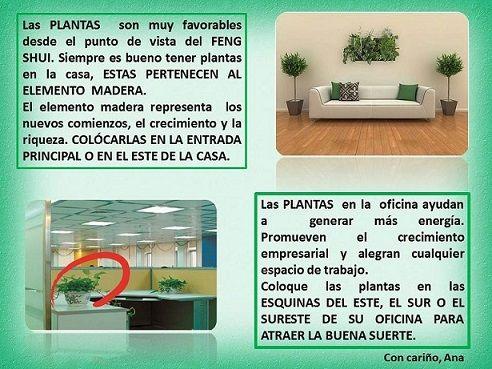 Las plantas son requisito indispensable en el feng shui - Feng shui limpiar casa malas energias ...