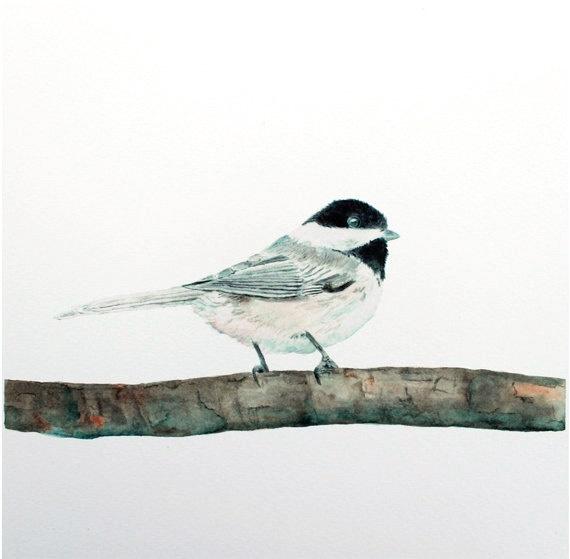 Mejores 78 imágenes de Tordu. en Pinterest | Pájaros bonitos ...