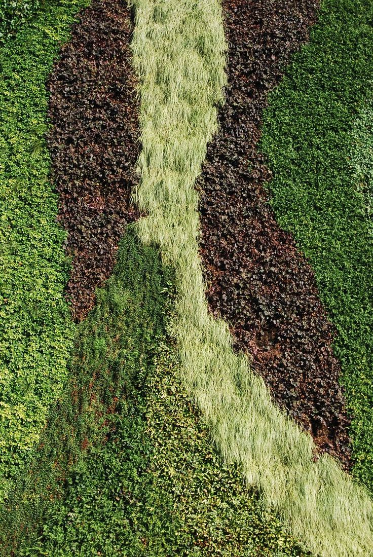 306 best living walls images on pinterest gardening for Living wall texture