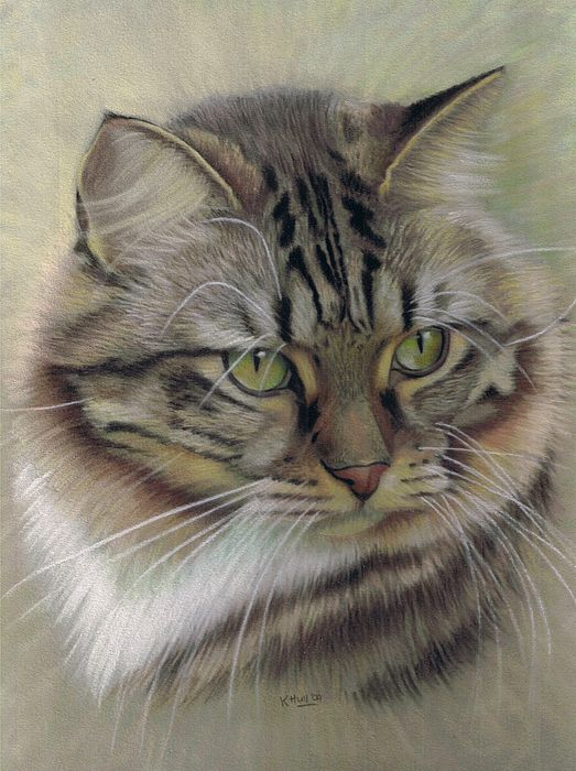 Cat drawing, pastels on velour - sweet and soft!