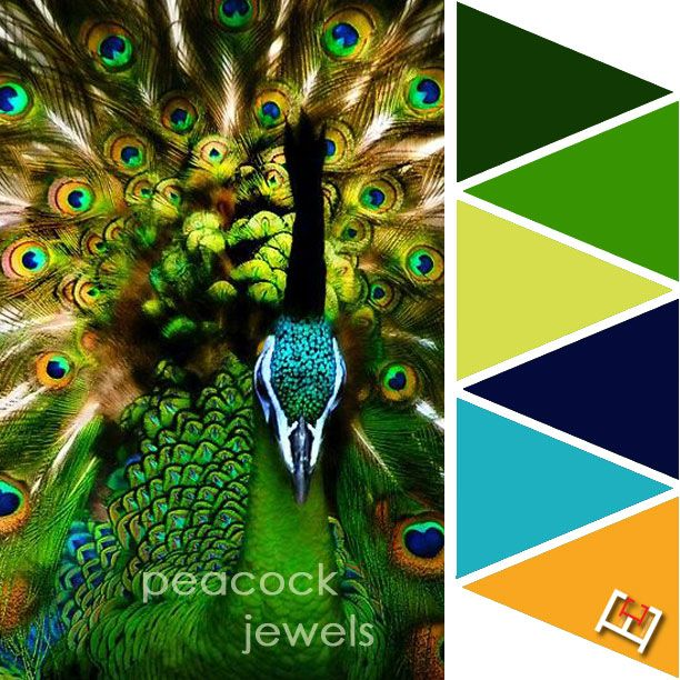 Best 25 Peacock Color Scheme Ideas On Pinterest: Wildlife Expressions Images On
