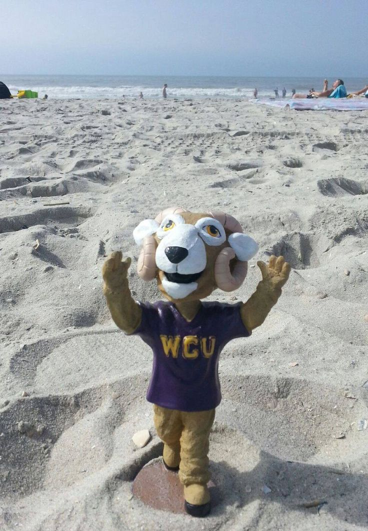 Rammy's got his hooves in the sand! #summerpride