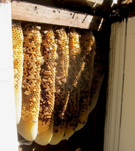 how to make bee hives