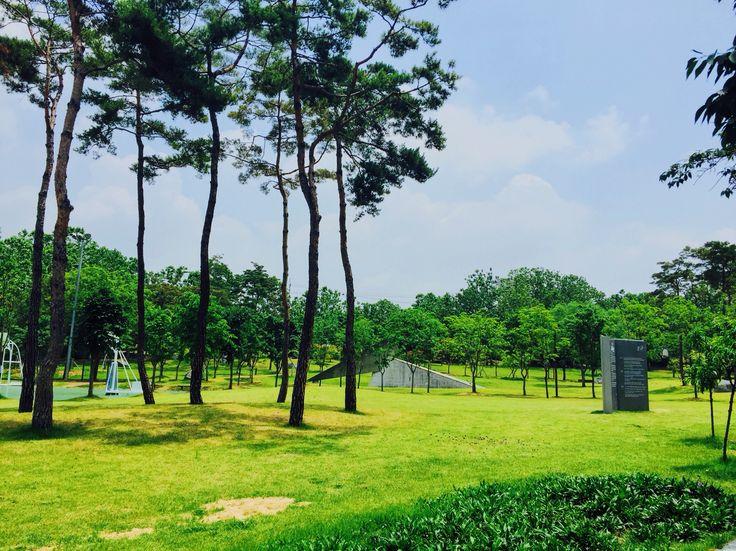Central Park  in KNU  / Jun 7, 2016 / #Korea #Daegu #한국 #대구 #KNU #경북대학교 #Centralpark #센트럴파크 #잔디 #공원 #나무