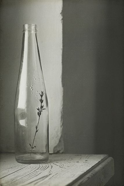 simplicity and light and shadows, roundness of bottle contrasts with angle of wall