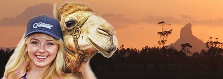 CAMELS AND CANAPES  Something different to enjoy on your Sunshine Coast escape…
