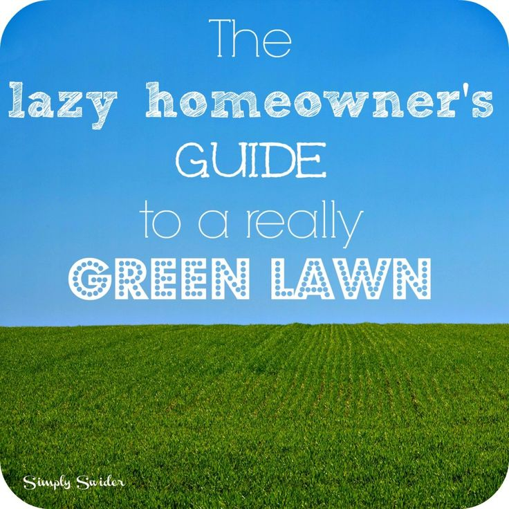 The lazy homeowner's guide to a really green lawn