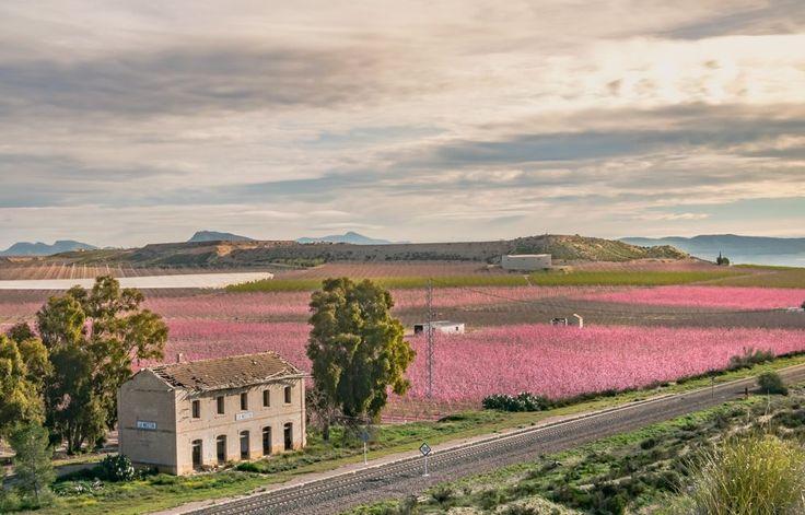 Image result for floracion cieza