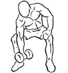 Curl de concentração com halter Instruções Preparação: Sente-se num banco plano. Agarre um halter entre os pés. Coloque a parte superior do braço na parte