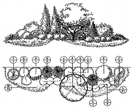 Fragrant Border Plan;  Downloadable Landscape Plans – Sheridan Nurseries