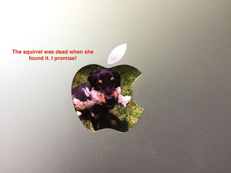 Get a Customized Photo Decal - Lights Up with Apple Logo on MacBooks - 2 Decals/Stickers per Order by WallMac on Etsy