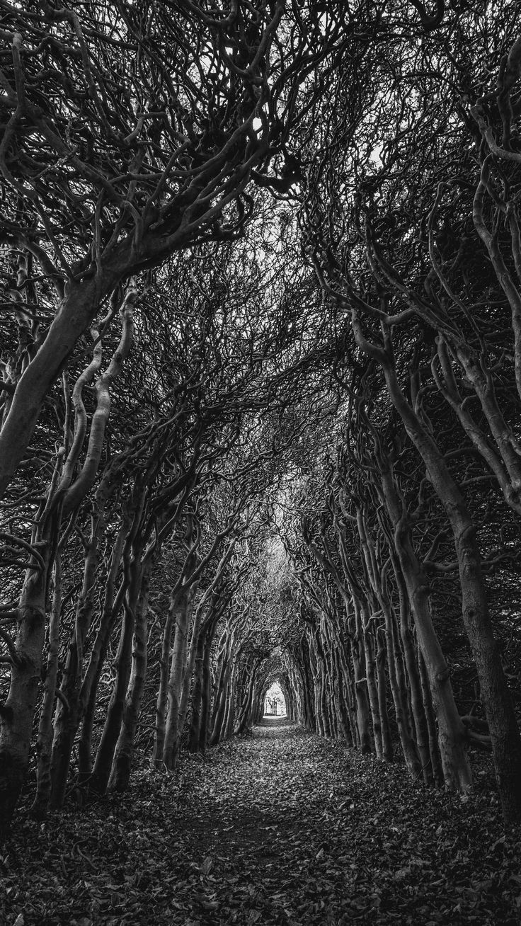 Black Nature Wallpaper 4k In 2020 Cool Wallpapers Black And White Nature Wallpaper Spooky Trees