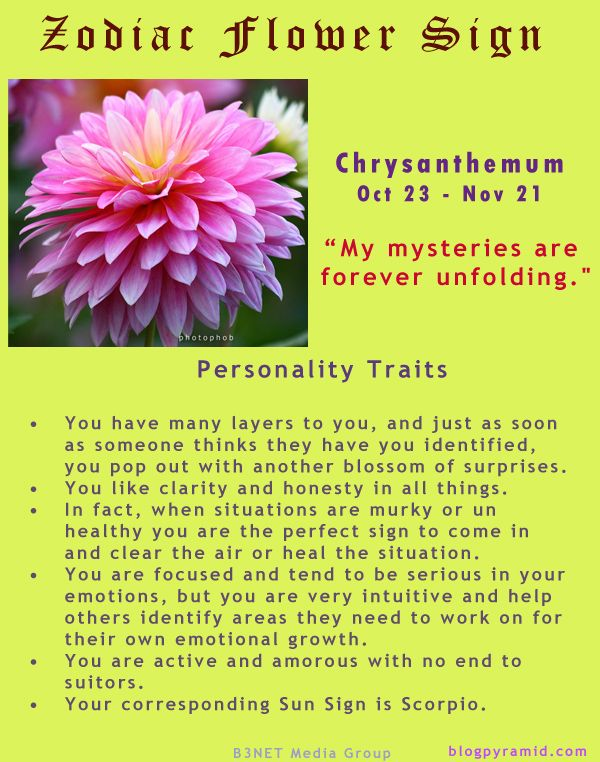 Divine Spark:  #Zodiac Flower Sign ~ Chrysanthemum October 23 - November 21 (#Scorpio).
