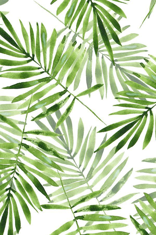 Watercolor palm leaves by gribanessa in emerald green.  Beautiful summer palms pattern available in gift wrap, wallpaper, and fabric. Bright green and deep emerald on a white background in a relaxed painterly style.  #watercolor #palms #monstera