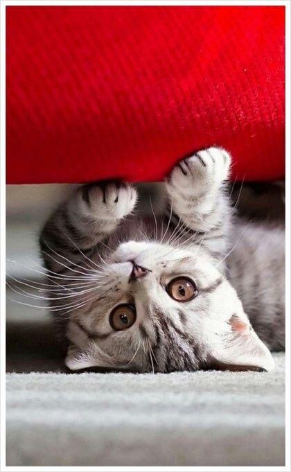 귀여운 고양이